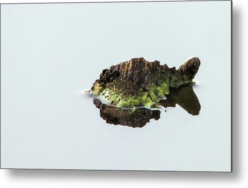 Turtle Metal Print featuring the photograph Turtle or Mountain by Randy J Heath