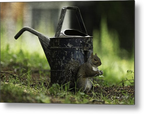 Watering Can Metal Print featuring the photograph Watering Can by Everet Regal