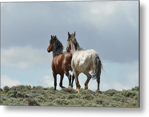 Wild Horses Metal Print featuring the photograph We Will Be Over the Hill in a Few Seconds by Frank Madia