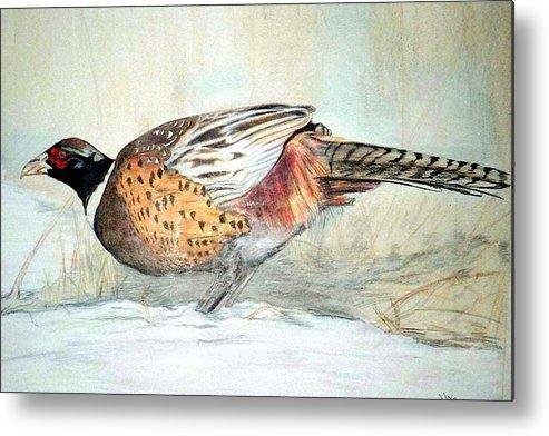 Ringneck Pheasant Metal Print featuring the painting Winter Ringneck by Debra Sandstrom