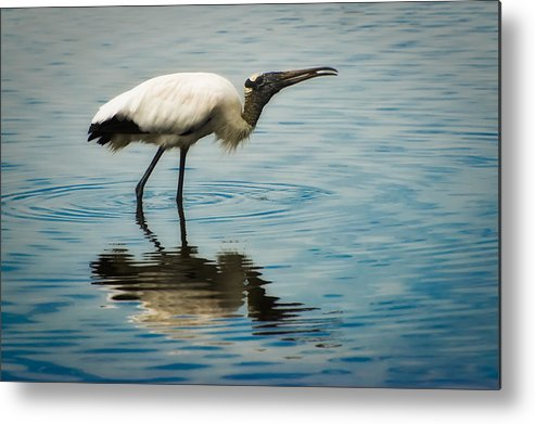 Stork Metal Print featuring the photograph Wood Stork by Rich Leighton