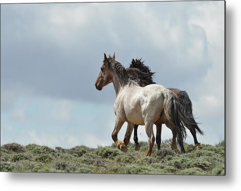Wild Horses Metal Print featuring the photograph You Will Never Catch Us by Frank Madia