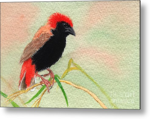 Bird Metal Print featuring the painting Zanzibar Red Bishop by Lynn Quinn