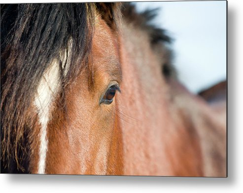 Horse Metal Print featuring the photograph Equine Beauty by Dageldog