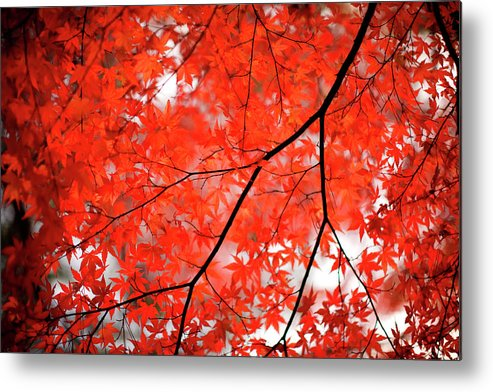 Tranquility Metal Print featuring the photograph Fall Colors In Japan by Jdphotography