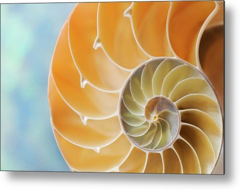 Mollusk Metal Print featuring the photograph Nautilus Shell by Nautilus shell studios