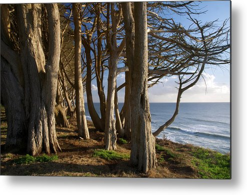 Tranquility Metal Print featuring the photograph Rustic Davenport Coast by Mitch Diamond