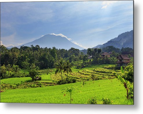 Scenics Metal Print featuring the photograph Indonesia, Bali, Rice Fields And by Michele Falzone