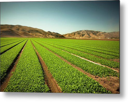 Environmental Conservation Metal Print featuring the photograph Crops Grow On Fertile Farm Land by Pgiam