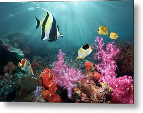 Tranquility Metal Print featuring the photograph Coral Reef Scenery by Georgette Douwma
