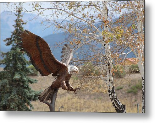 Eagle Metal Print featuring the photograph American Eagle in Autumn by Colleen Cornelius