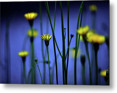 Outdoors Metal Print featuring the photograph Avatar Flowers by Mauro Cociglio - Turin - Italy
