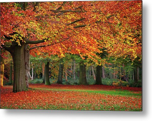Orange Color Metal Print featuring the photograph Beautiful Autumn In Park by Lorado