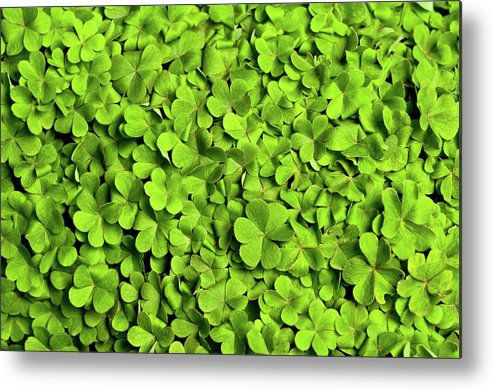 Leaf Metal Print featuring the photograph Bed Of Clover by Kledge