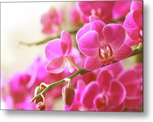 Environmental Conservation Metal Print featuring the photograph Blooming Pink Orchid On A Green Branch by Dreaming2004