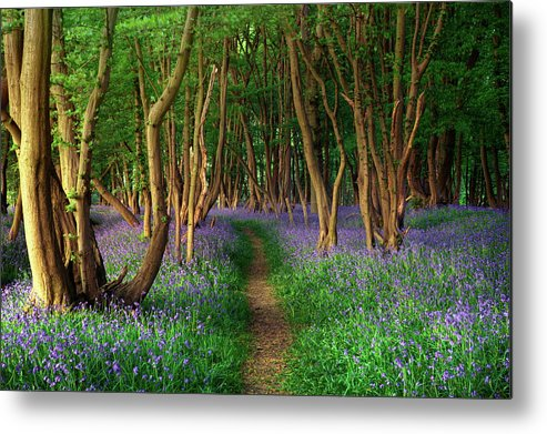 Tranquility Metal Print featuring the photograph Bluebells In Sussex by Photography By Sam C Moore