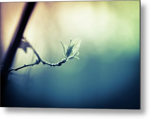 Sunlight Metal Print featuring the photograph Branch With New Leaves by Jeja