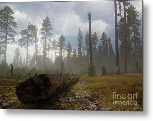 Burnt Metal Print featuring the photograph Burned Trees At Lassen Volcanic by Victor De Souza