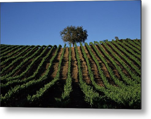Following Metal Print featuring the photograph Californias Winegrape Growing Region Of by George Rose