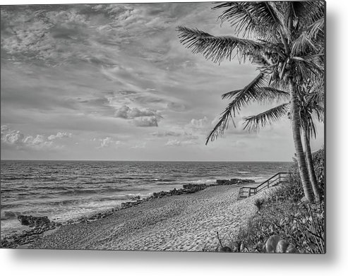 Beach Metal Print featuring the photograph Coral Cove Palms by Steve DaPonte