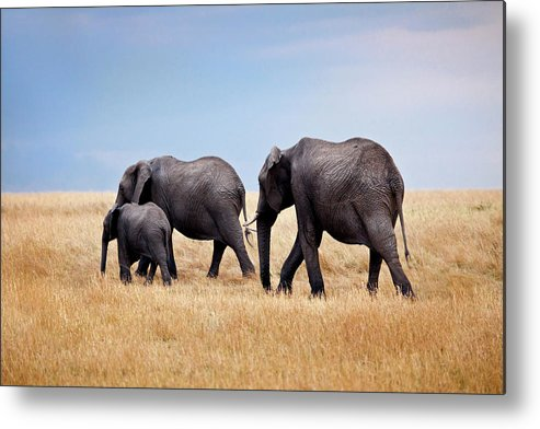 Kenya Metal Print featuring the photograph Elephant Family In Kenya Africa by Photos By Steve Horsley