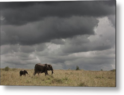 Kenya Metal Print featuring the photograph Elephant Under Cloudy Sky by Buena Vista Images