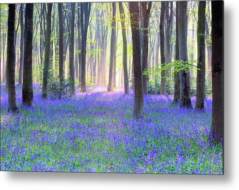 Scenics Metal Print featuring the photograph English Bluebell Wood At Dawn by Doug Chinnery