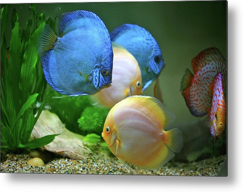 Underwater Metal Print featuring the photograph Fish In Water by Vietnam