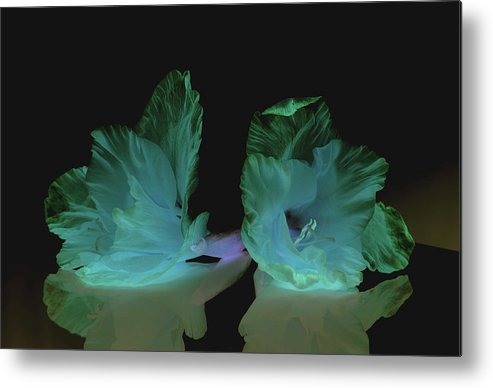 Flower Metal Print featuring the photograph Flowers in my dreams by Paulina Roybal