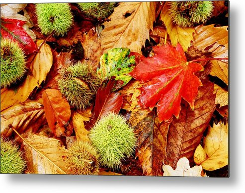 Tranquility Metal Print featuring the photograph Forest Floor by Andrew Turner