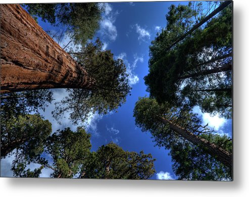 Sequoia Tree Metal Print featuring the photograph Giant Sequoias - 2 by Rhyman007