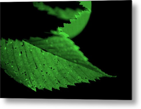 Leaf Metal Print featuring the photograph Green Leaf in Sun by Lonnie Paulson