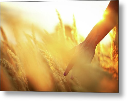 Farm Worker Metal Print featuring the photograph Harvest In The Morning by Aleksandarnakic