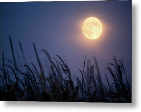 Sky Metal Print featuring the photograph Harvest Moon by Jimkruger