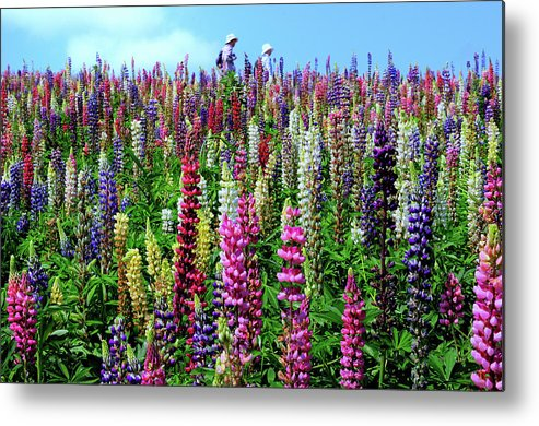 Scenics Metal Print featuring the photograph Hokkaido by Frank Chen