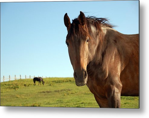 Horse Metal Print featuring the photograph Horse by Esemelwe
