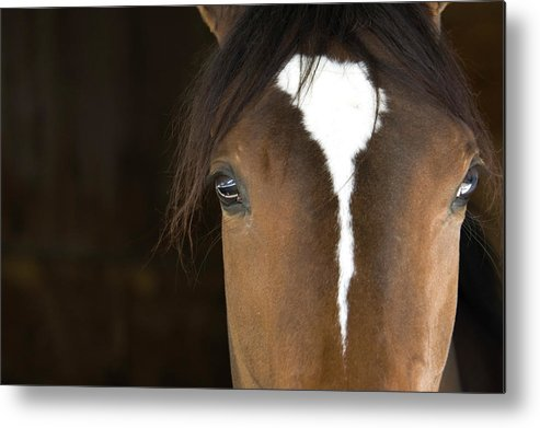 Horse Metal Print featuring the photograph Horse Head by Rterry126