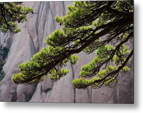 Chinese Culture Metal Print featuring the photograph Huang Shan Landscape, China by Mint Images/ Art Wolfe