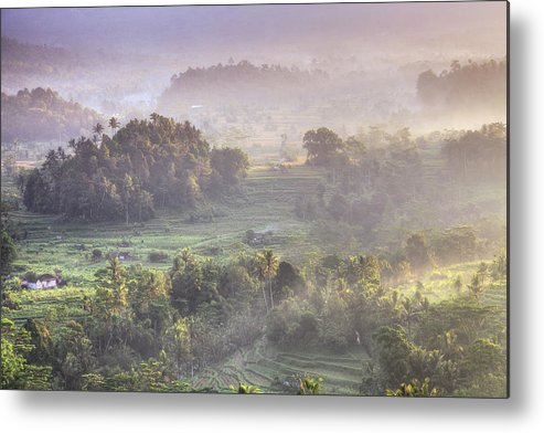 Tranquility Metal Print featuring the photograph Indonesia, Bali, Forest Landscape by Michele Falzone