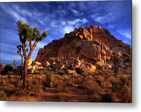 California Metal Print featuring the photograph Joshua Tree And Rock Pile by Bill Wight Ca