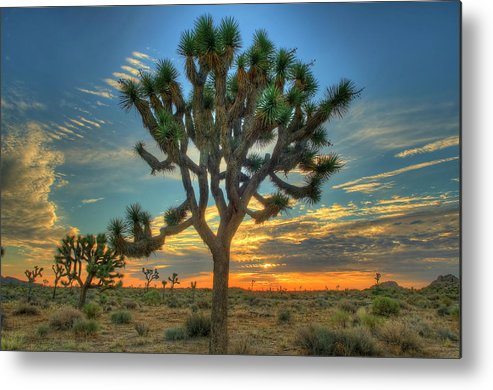 Scenics Metal Print featuring the photograph Joshua Tree At Sunrise by Photograph By Kyle Hammons