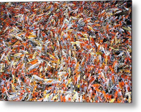 Pets Metal Print featuring the photograph Koi Jigsaw by Chris Edwards