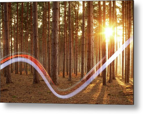 Environmental Conservation Metal Print featuring the photograph Light Swoosh In Woods by Tim Robberts