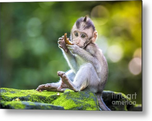 Small Metal Print featuring the photograph Little Baby-monkey In Monkey Forest Of by Trubavin