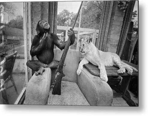 Pets Metal Print featuring the photograph Monkeying About by R Dumont
