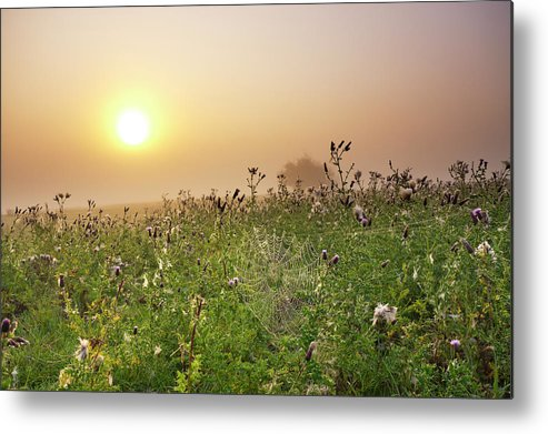 Grass Metal Print featuring the photograph Morning Dew On Spiders Cobweb by Travelpix Ltd