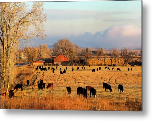 Scenics Metal Print featuring the photograph Morning Farm Scene by Beklaus