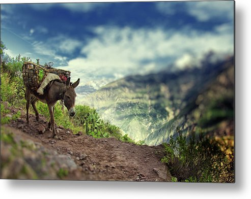 Working Animal Metal Print featuring the photograph Mountain Donkey by By Kim Schandorff