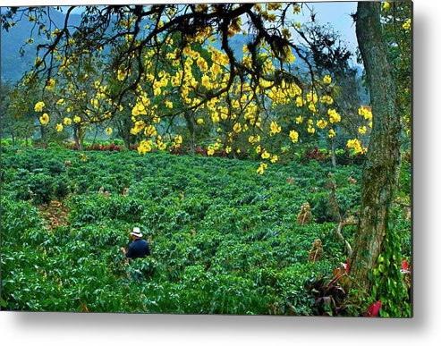 Expertise Metal Print featuring the photograph Orosi Valley by John Coletti