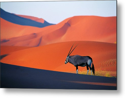 Scenics Metal Print featuring the photograph Oryx Antelope by Natphotos